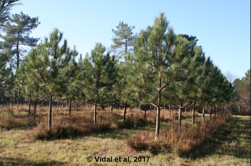 Assessing the biological and climatic factors affecting the productivity and resilience of trees.