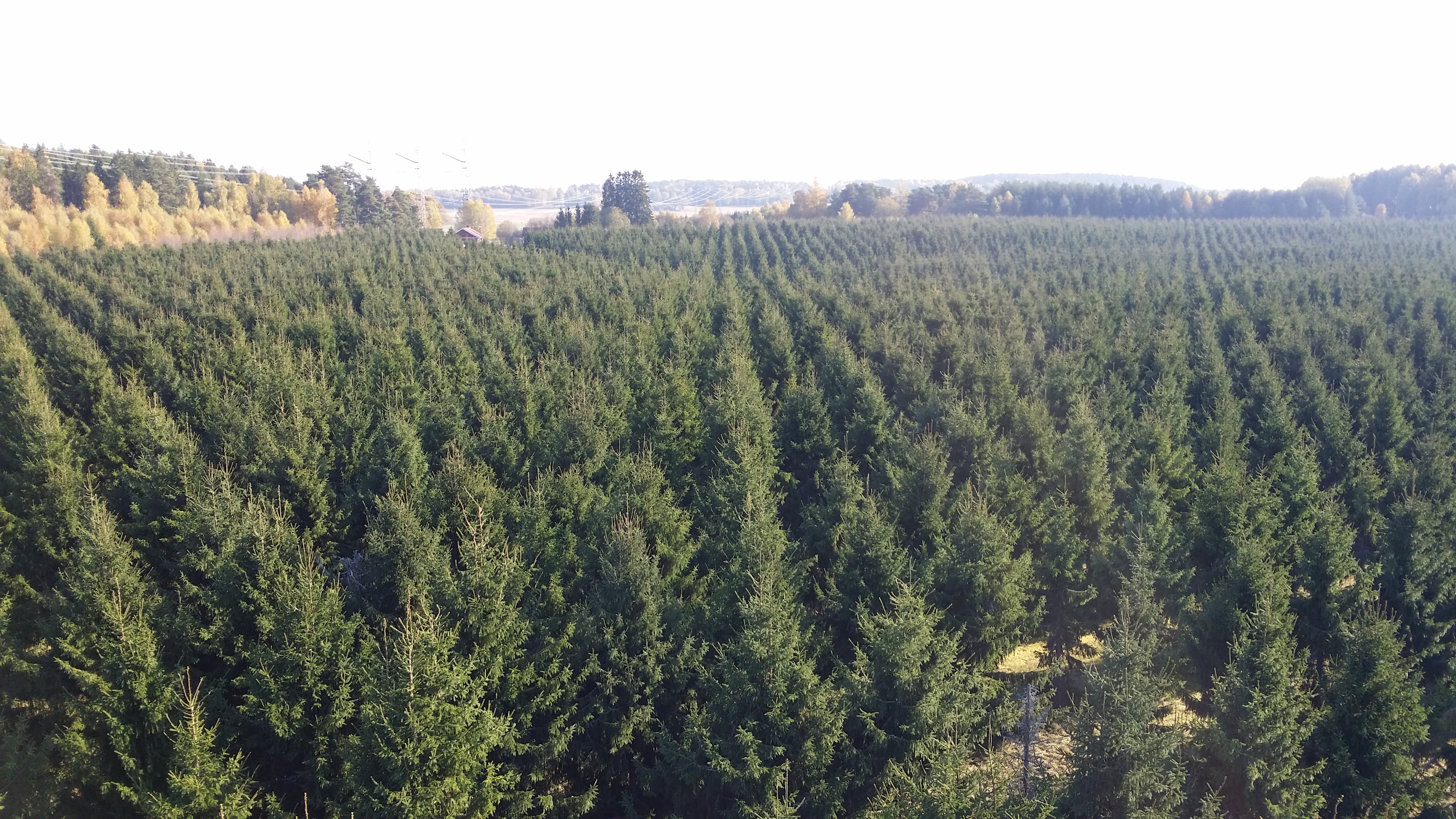 What plant materials should we use and how should they be managed to provide Europe with healthy and productive forests in a future climate?