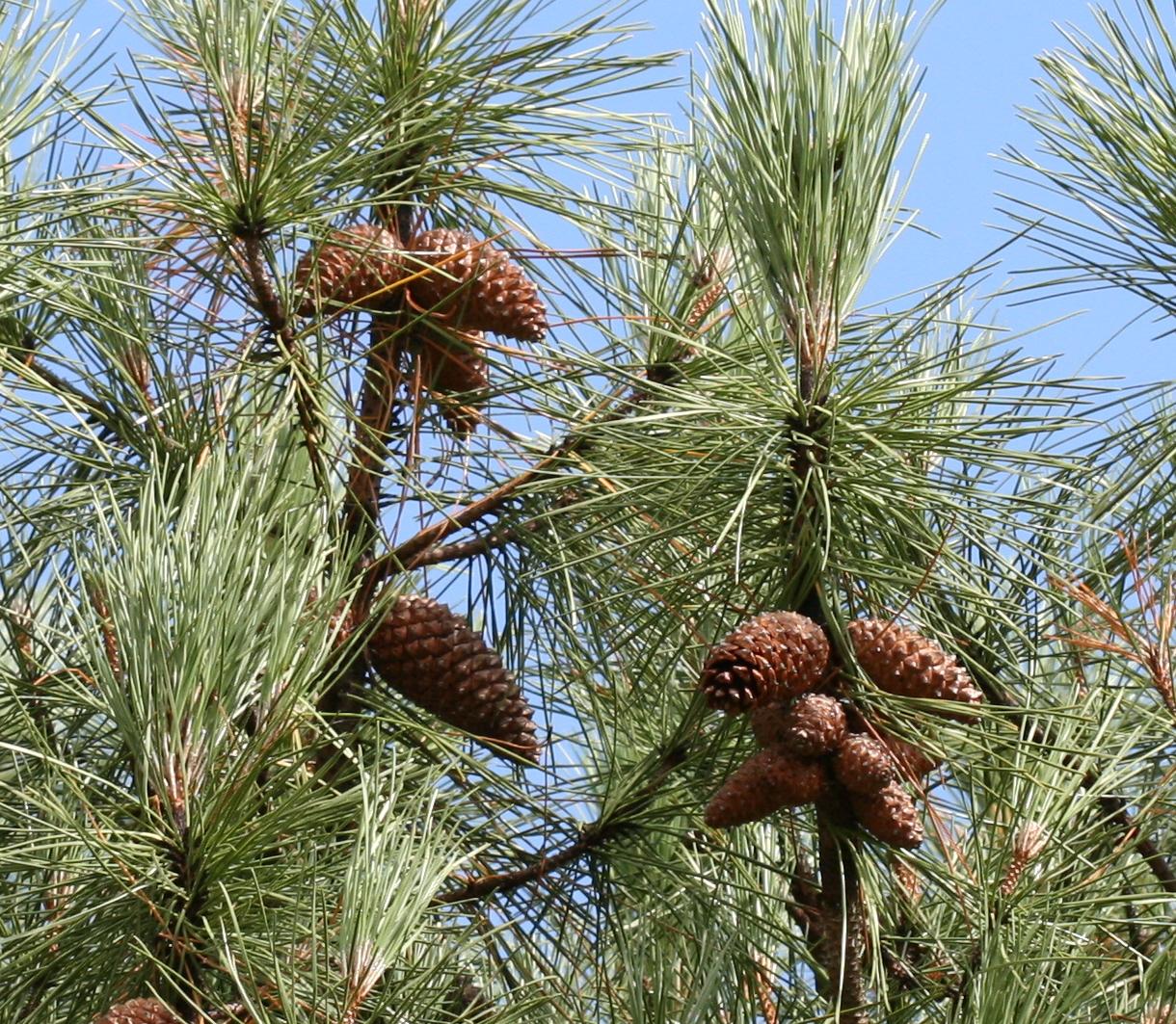 What will tomorrow's tree breeding sector look like? An economic analysis