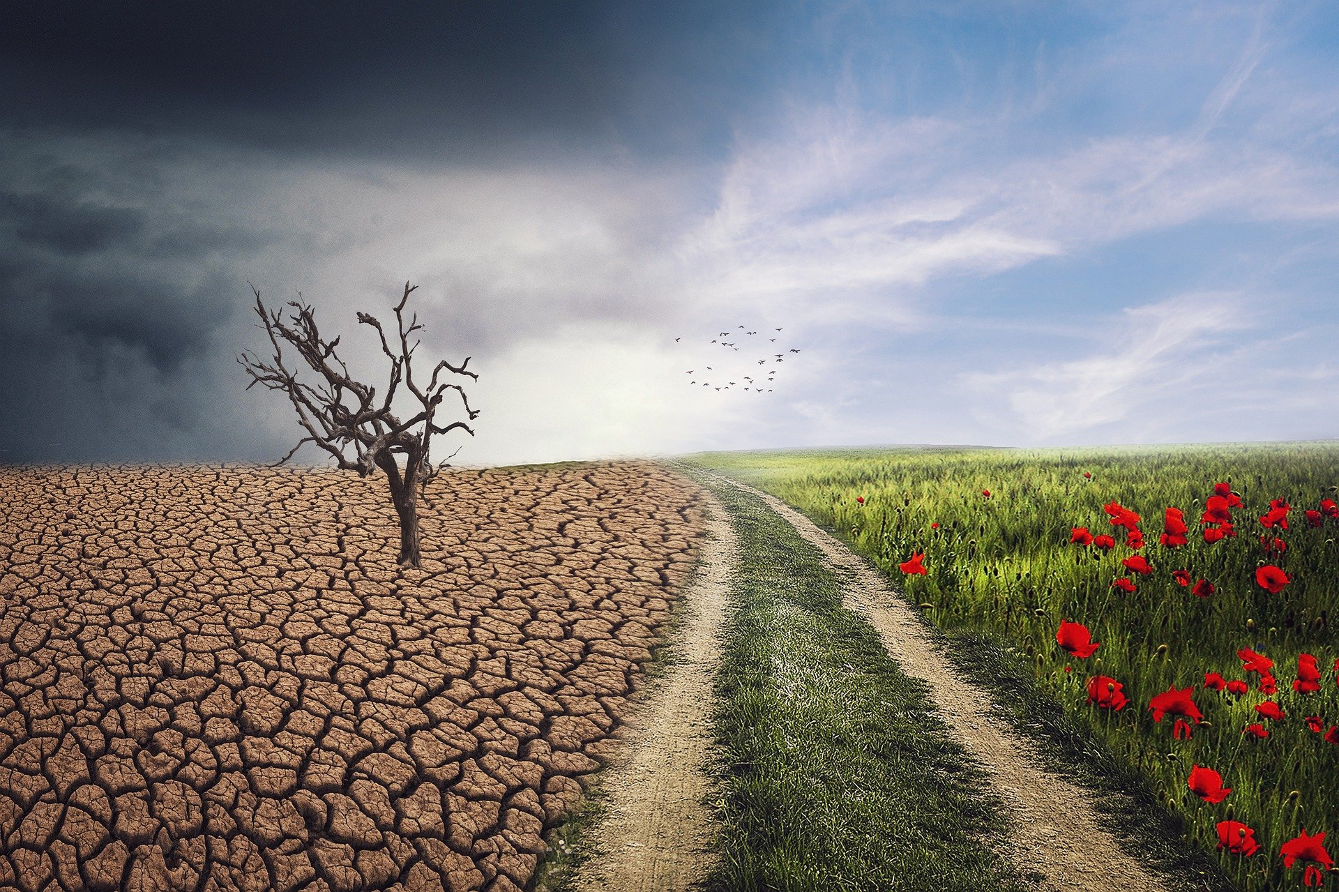 EVOLTREE Second series of online Seminars: Adaptation to climate change