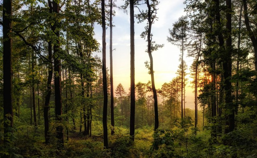First EVOLTREE Conference 2021: Genomics and Adaptation in Forest Ecosystems